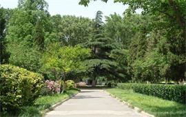 山东大学风景
